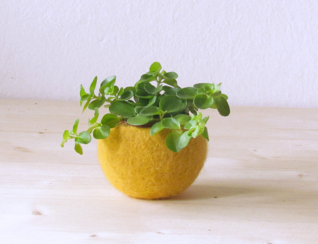Succulent planter/felted pod/Air plant pot/mustard yellow desk organizer