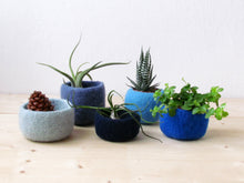 Blue succulent planters set, Instant collection