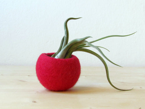 Red air plant pod/felt planter/micro succulent vase/Christmas red air plant display/winter decor