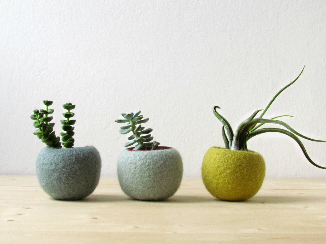 Felt succulent planter/hygge decor/felted pod/Succulent terrarium/Green felt vases/felt bowl/home decor