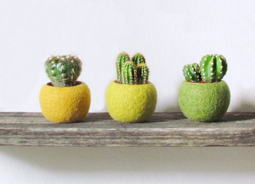 Mini planter set/plant pot/indoor planter/cactus vase/wife gift/home decor/kitchen decor/succulent planter/birthday gift