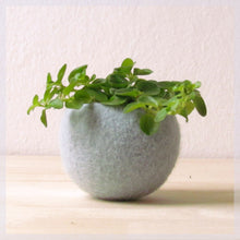 Felt succulent planter/felted bowl/Succulent pod/light grey mint green/winter decor