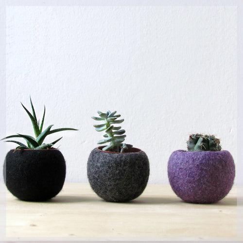 Felt succulent planter collection/black grey purple/Succulent terrarium/the dark side of the moon/home decor