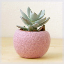 Felt succulent planter/felted bowl/Mini flower vase vase/sakura pink for spring/Easter decor