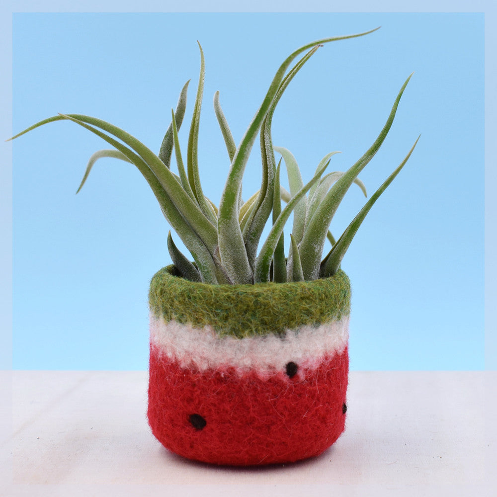Felt succulent planter/cactus vase/Watermelon vase/summer gift/felted planter/housewarming gift/Red watermelon/gift for her