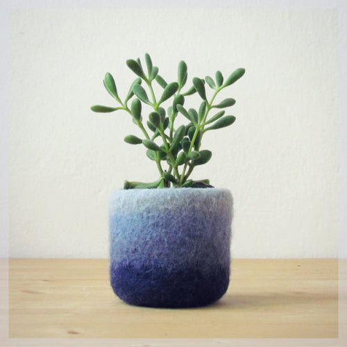 Ombre blue mini plant vase for air plants