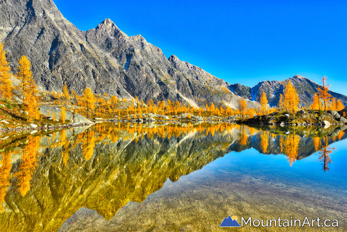 Golden larch tree reflections in an alpine lake, Purcell Mountains, BC, HDR photo