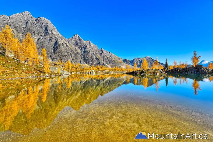 golden larch reflections alpine lake, monica meadows, purcell mountains, bc