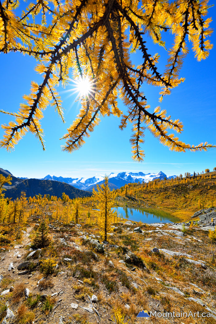 """Through the Eyes of a Larch"""