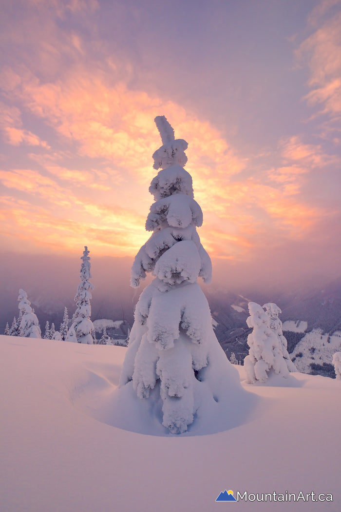 snowghost tree sunset alpenglow winter kaslo bc
