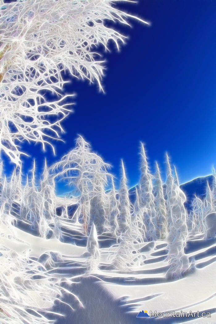 """Dayglow Snow Trees of Whitewater"""