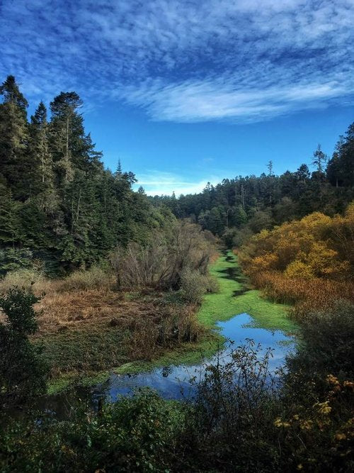 Becky Jaffe: View From The Skunk Train