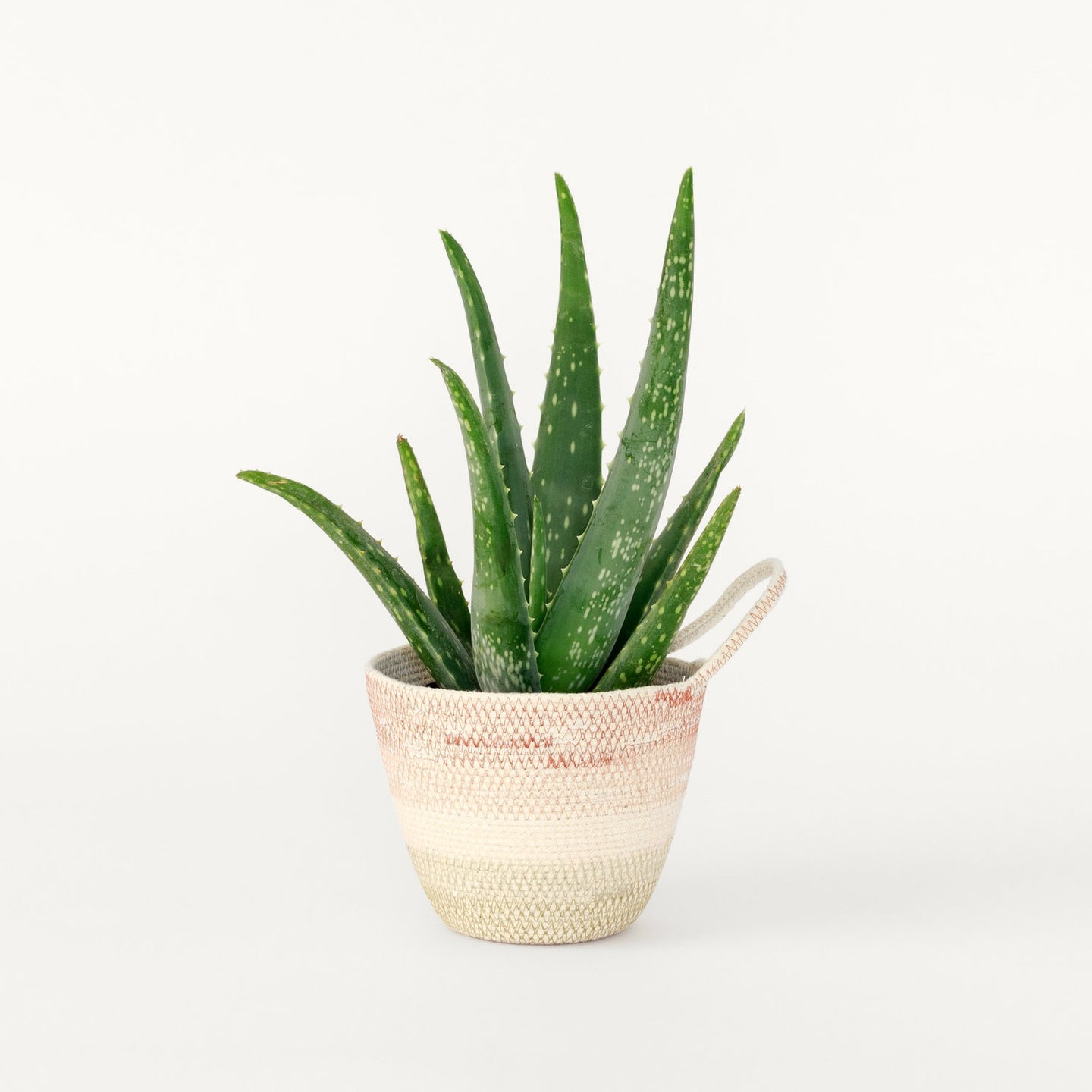 Moriah Okun: Medium Planter