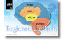 Brain Matters Large Poster