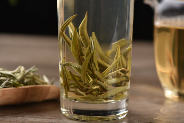 "Early Spring ""Snow Buds"" White Tea of Yunnan"