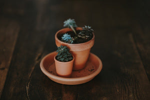 How To Properly Plant A Succulent in Any Container