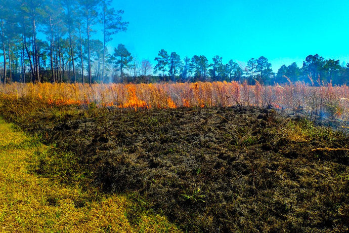 Prescribed Burn at Marysee Prairie