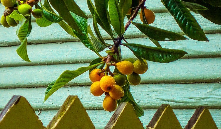 5 Tips for Selecting Fruit Trees for Your Garden