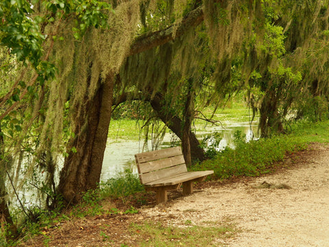 Brazos Bend State Park, The Botanical Journey