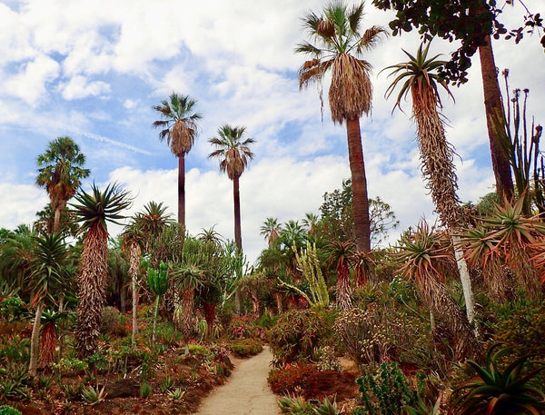 Desert Garden of The Huntington, The Botanical Journey