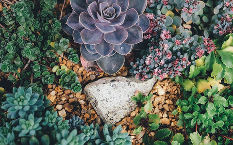 Succulents, How to properly plant a succulent, The Botanical Journey, Indoor Palnts
