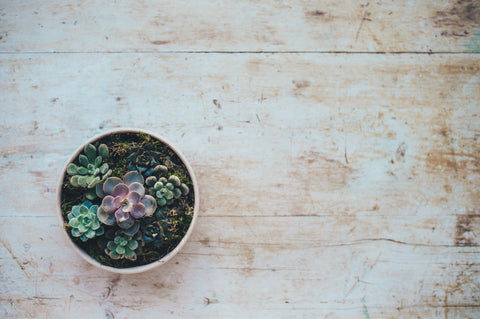 How to Plant a Succulent in Any Container, The Botanical Journey