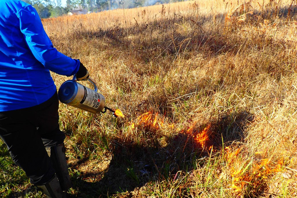 A torch spits fuel and fire on the dry grasses.