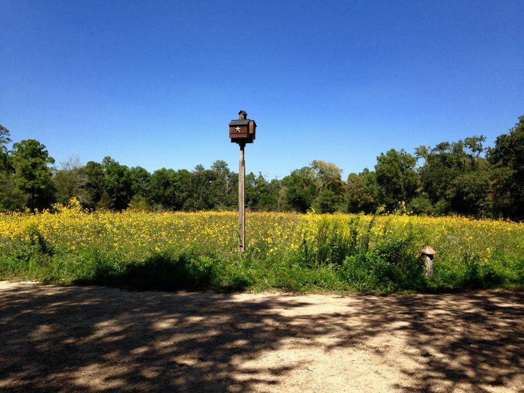 Lovely view, take a moment to sit at the many benches and observe the flight of dragonflies, butterflies and bees.