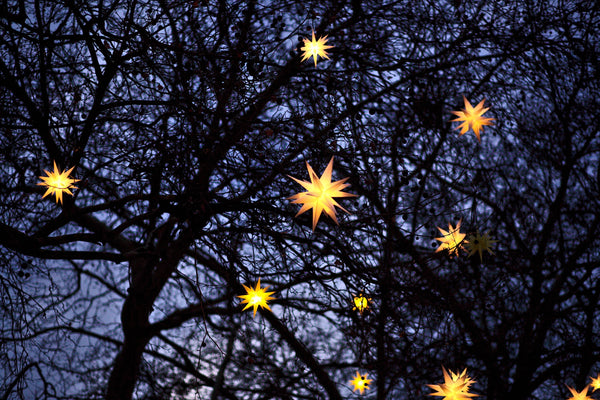 stars through the trees, History of the Christmas Tree, Photo by Filip Bunkens on Unsplash