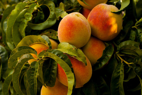 The Botanical Journey, Peach Tree, A Story of Peaches, Peaches