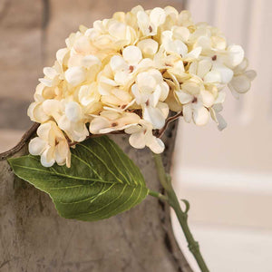 "Antique Ivory Hydrangea Spray is a floral made of ivory fabric petals on a green plastic stem. It has a large faux leaf jutting from the stem and looks charming as is or combined into a floral arrangement. It easily fits into baskets, buckets, and milk cans and more. 12"" high by 6"" wide by 6"" deep."