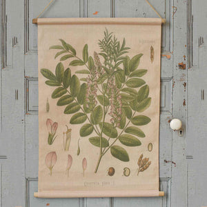 Reminiscent of vintage school charts or scrolls, this canvas banner features beautiful illustrations of the Glycyrrhiza flower. The printed reproduction Botanical Illustration Canvas Scroll with Glycyrrhiza has a time-worn, aged appearance, inspired by antique shop finds. The scroll banner features wooden rods on the top and bottom, just like old classroom educational charts. Add old-world charm to your farmhouse with this unique wall decor.