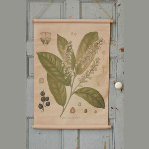 "Reminiscent of vintage school charts or scrolls, this canvas banner features beautiful illustrations of the Prunus Lauro. The printed reproduction Botanical Illustration Canvas Scroll with Prunus Lauro has a time-worn, aged appearance, inspired by antique shop finds. The scroll banner features wooden rods on the top and bottom, just like old classroom educational charts. Add old-world charm to your farmhouse with this unique wall decor. 24""L x 34""H"