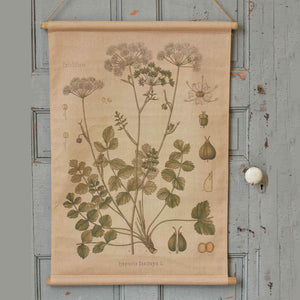 Botanical Illustration Canvas Scroll, Pimpinella