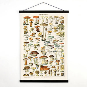 Reminiscent of vintage school teaching charts or scrolls, this Vintage Botanical French Mushroom Canvas Scroll lends an earthy touch to any room. This print comes from Le Petit Larousse Illustré, a French dictionary, illustrated by Adolphe Millot, (1921) a painter, lithographer and entomologist. The art is printed with archival ink on canvas with stained wood trim.