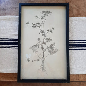 "The White Flower Botanical Illustration has a vintage allure that captures the spirit of nature in bloom. It features an aged black wooden frame. The print has distressing marks for an antique, tea-stained feel. Includes a glass covering and comes ready to hang with two saw-tooth hangers at the back. high. Add old-world charm to your farmhouse with this unique wall decor. Measures 12"" wide by 19"" high"