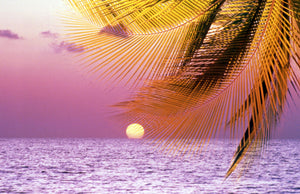 Stylized tropical scene with violet sea, pink sky, setting sun and palm fronds
