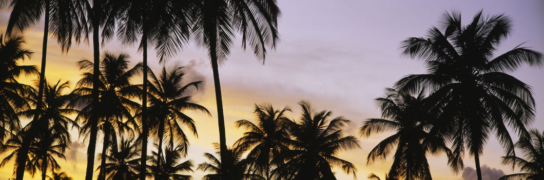 Silhouette of palm trees at sunset, Pigeon Point Beach, Tobago, Trinidad and Tobago, West Indies, Caribbean, Central America