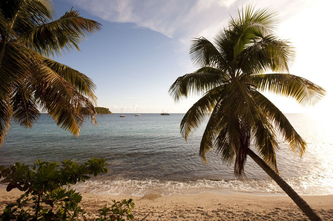 Palm trees on beach at sunset, Culebra Island, Puerto Rico