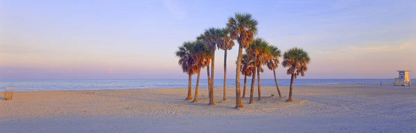 Palm trees on the beach, Florida, USA