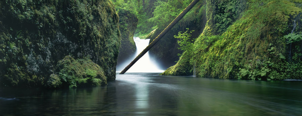 Waterfall in a forest, Punch Bowl Falls, Eagle Creek, Hood River County, Oregon, USA