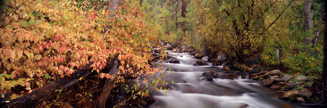 Stream flowing through a forest, Inyo County, California