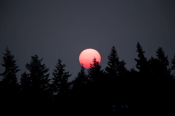 Silhouette of trees at sunset, Bainbridge Island, Kitsap County, Washington State, USA