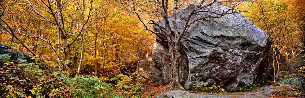Big boulder in a forest, Stowe, Lamoille County, Vermont, USA