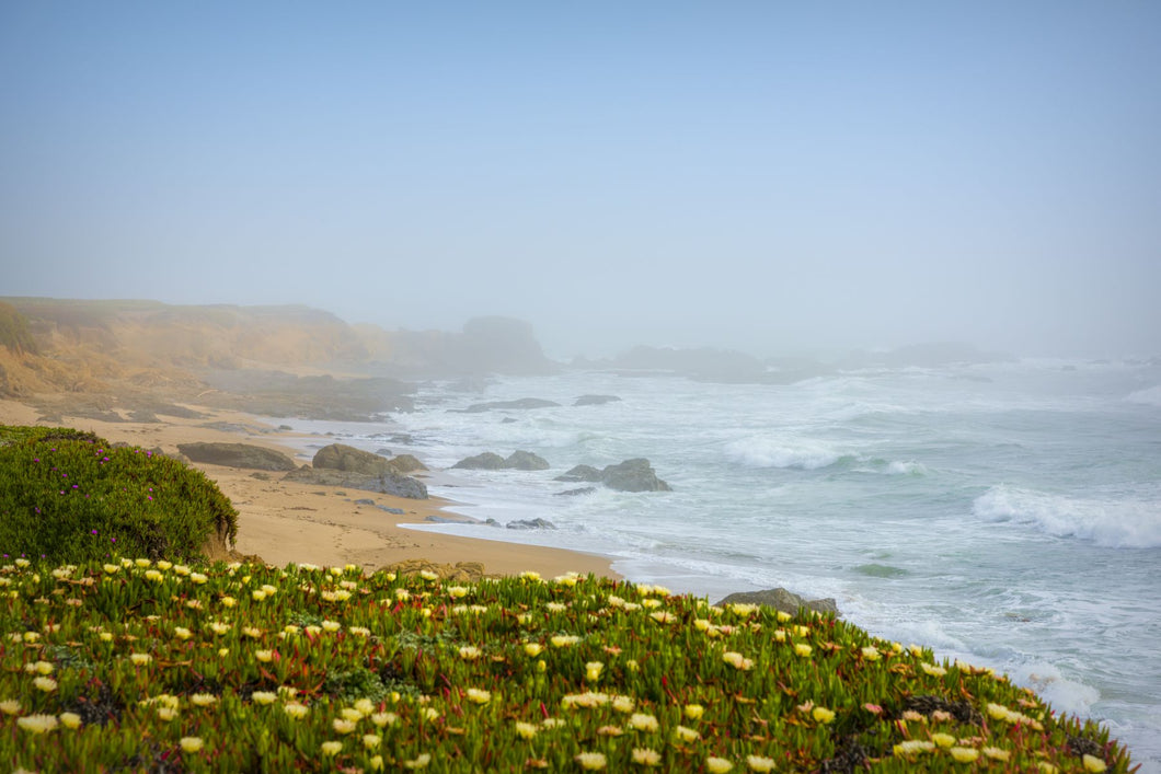 Wildflowers o the coast, Davenport, California, USA