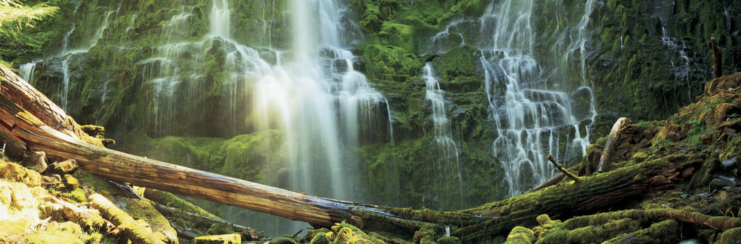 Waterfall in a forest, Proxy Falls, Three Sisters Wilderness Area, Willamette National Forest, Lane County, Oregon, USA