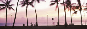 Palm trees on the beach, Waikiki, Honolulu, Oahu, Hawaii, USA