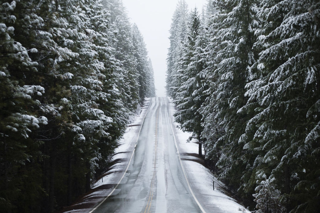 Snow covered trees both sides on a road, California, USA