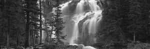Waterfall in a forest, Banff, Alberta, Canada