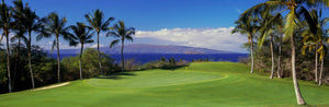 Palm trees in a golf course, Wailea Emerald Course, Maui, Hawaii, USA
